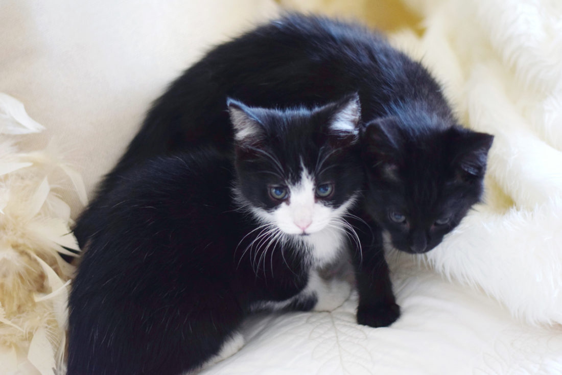 our kittens, rosette and romeo!!