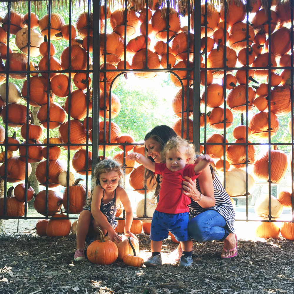 cheekwood harvest with my two little pumpkins!