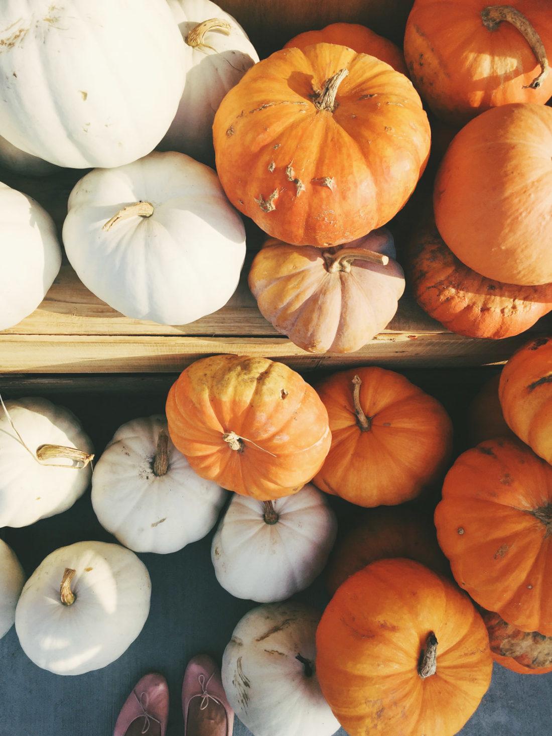 all the pumpkins!
